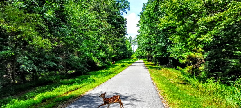 Raleigh, NC: Bucolic biking on the Neuse River Greenway Trail