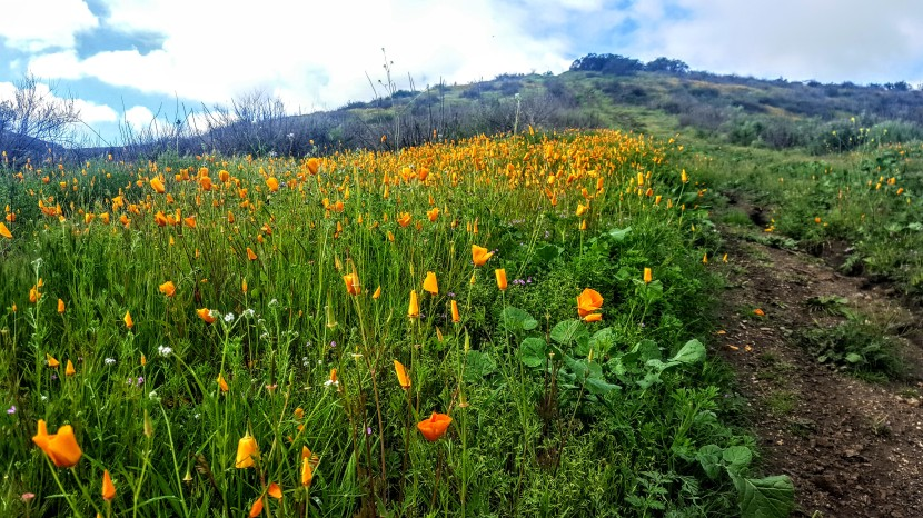 Footloose and Fancy Free: Off Trail in Fallbrook,CA