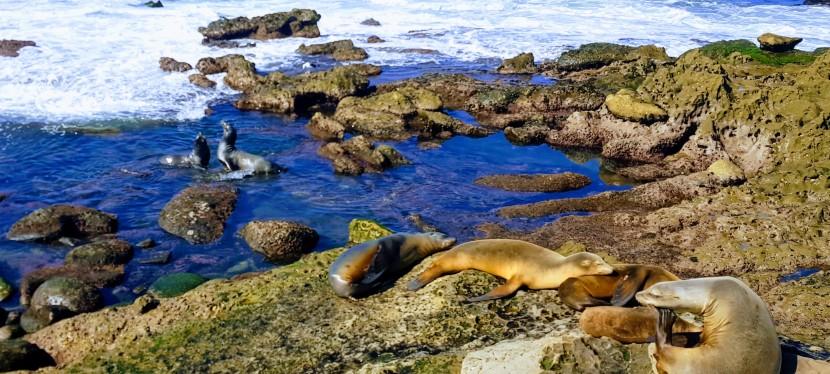 Seals, Sea Lions and Sea Caves, La Jolla,CA