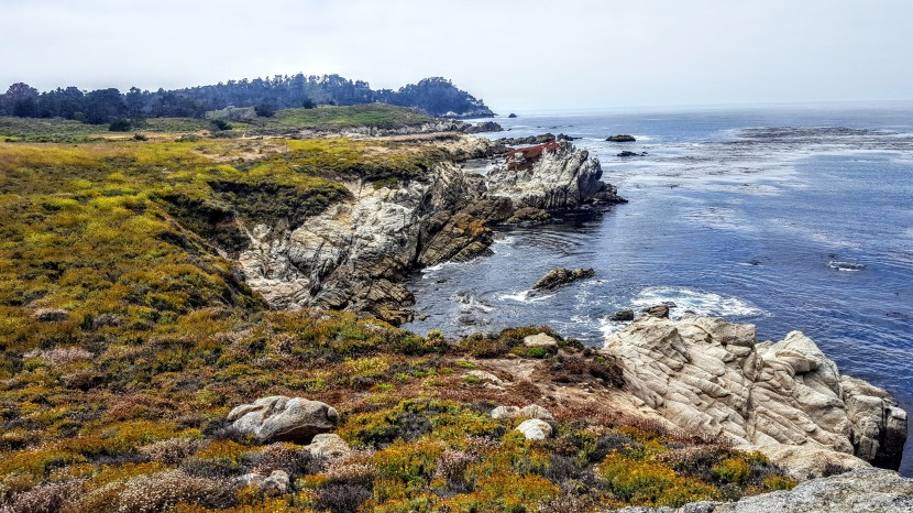 Exploring California Parks' Crown Jewel: Magnificent Point Lobos State Natural Reserve
