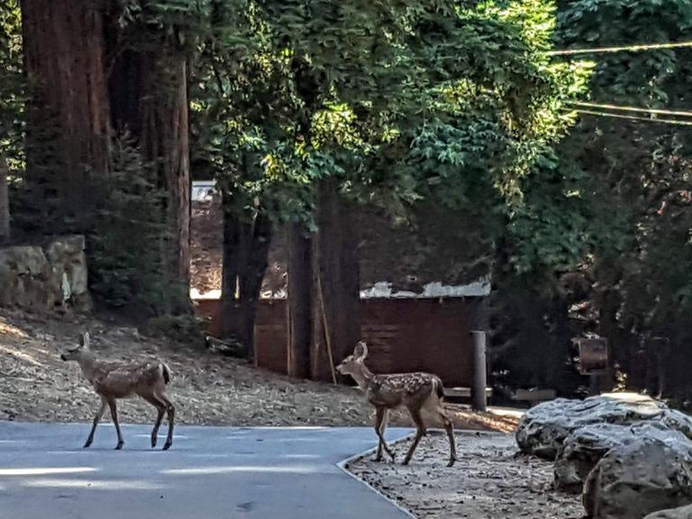 Sanborn park residents