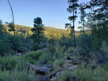 Thumb scenery
