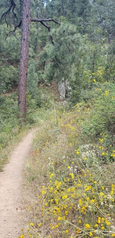 wildflowers on trail