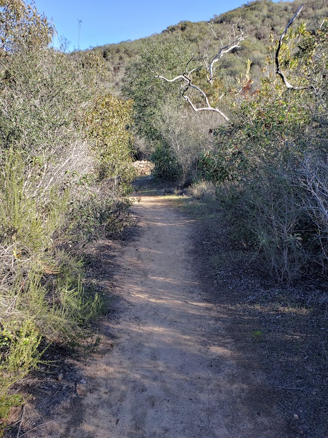 pleasant section of single track b summit