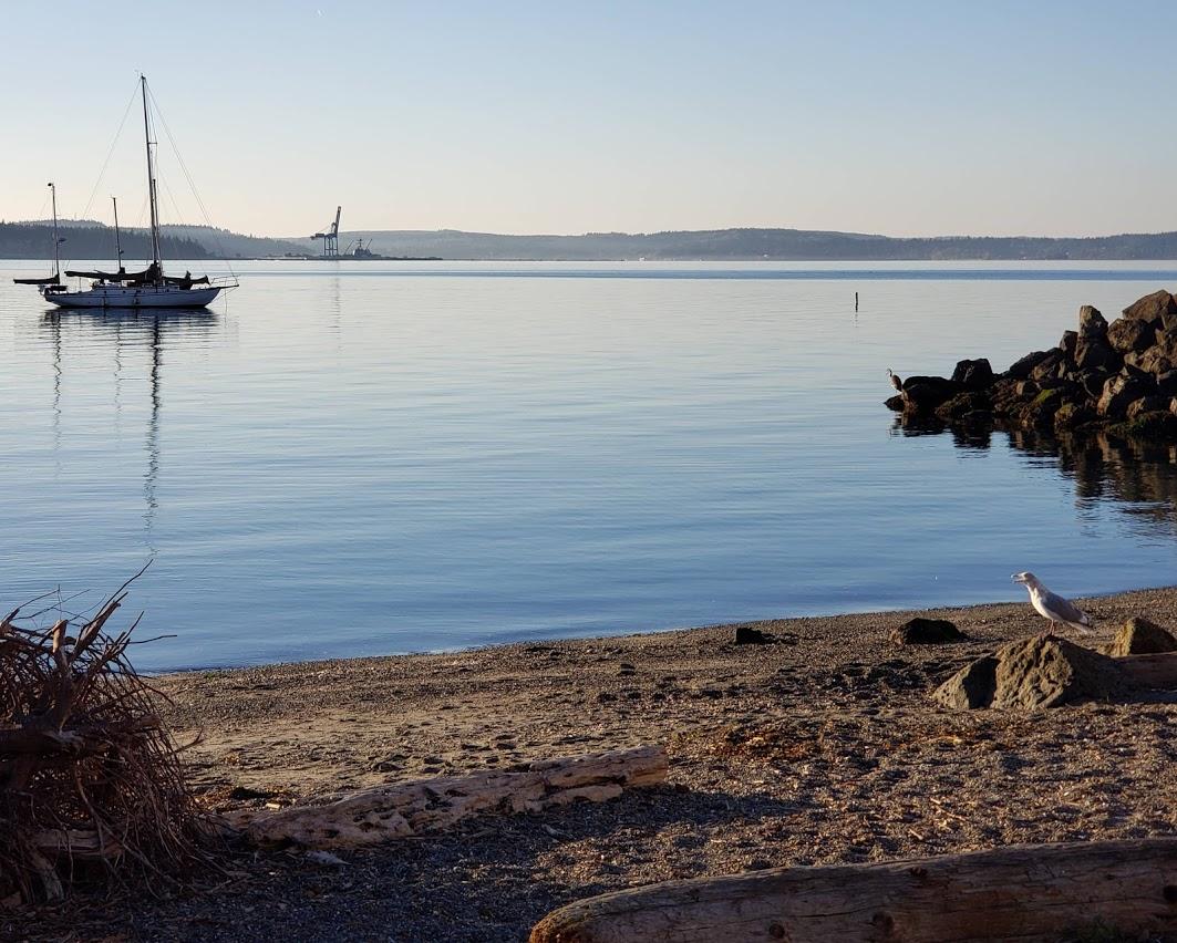 Port T seagul.jpg
