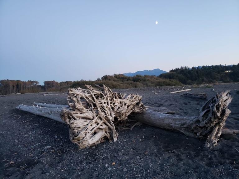 Logs and moon elwah beach