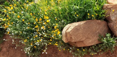 flowers and rock denk