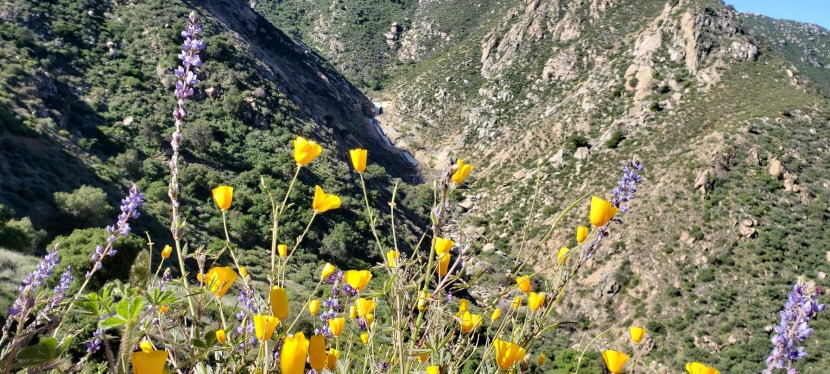 Chasing Waterfalls and Wildflowers: Three Sisters Falls Hike, SDCounty