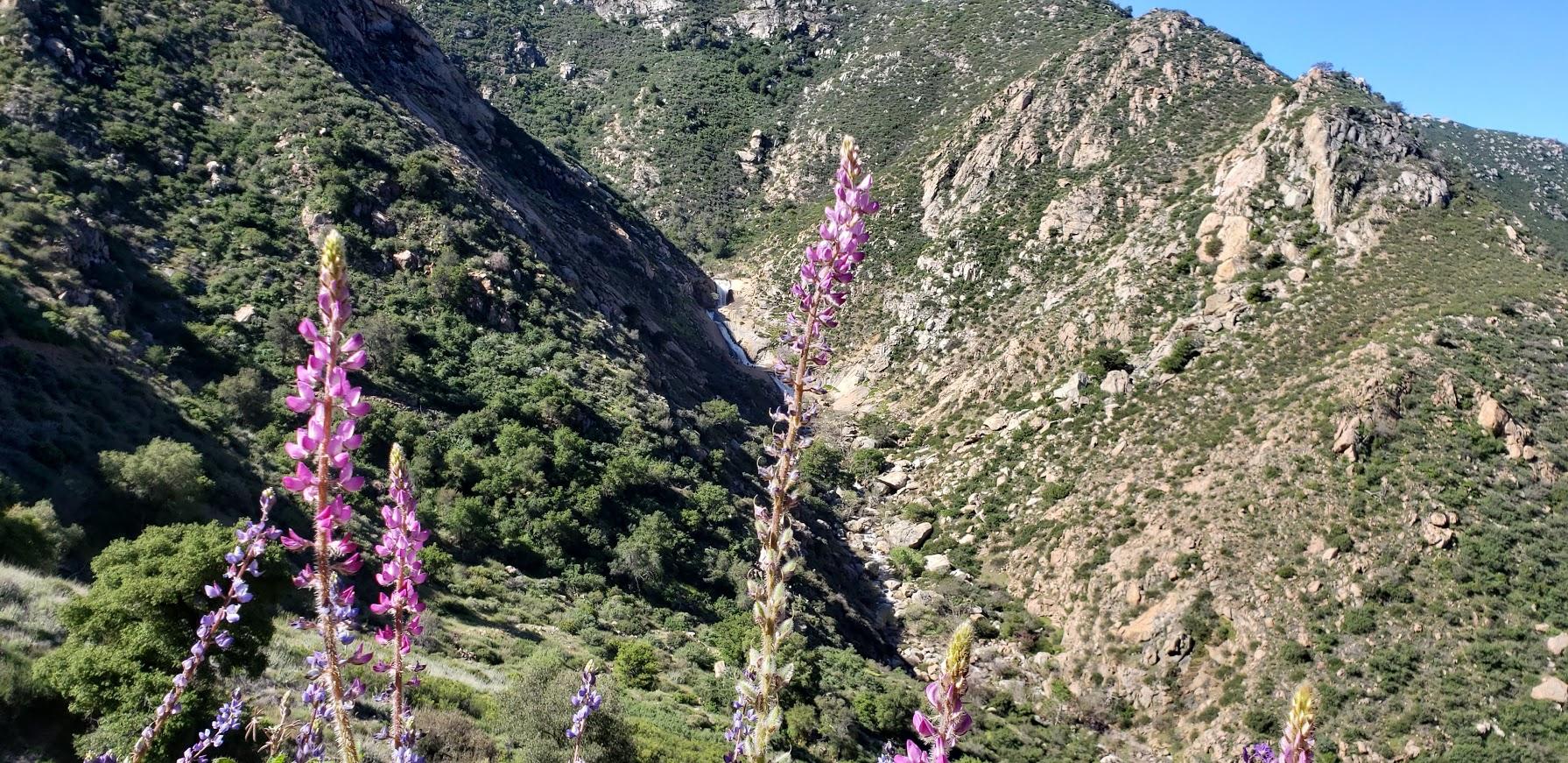 best wildflower filter 3 sisters