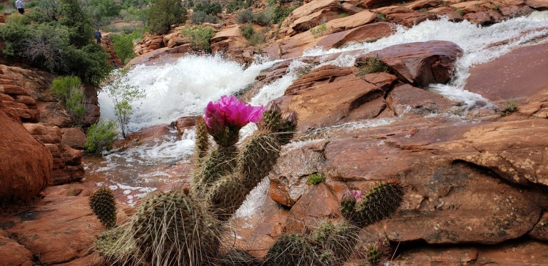 Best cactus bloom and gunlock