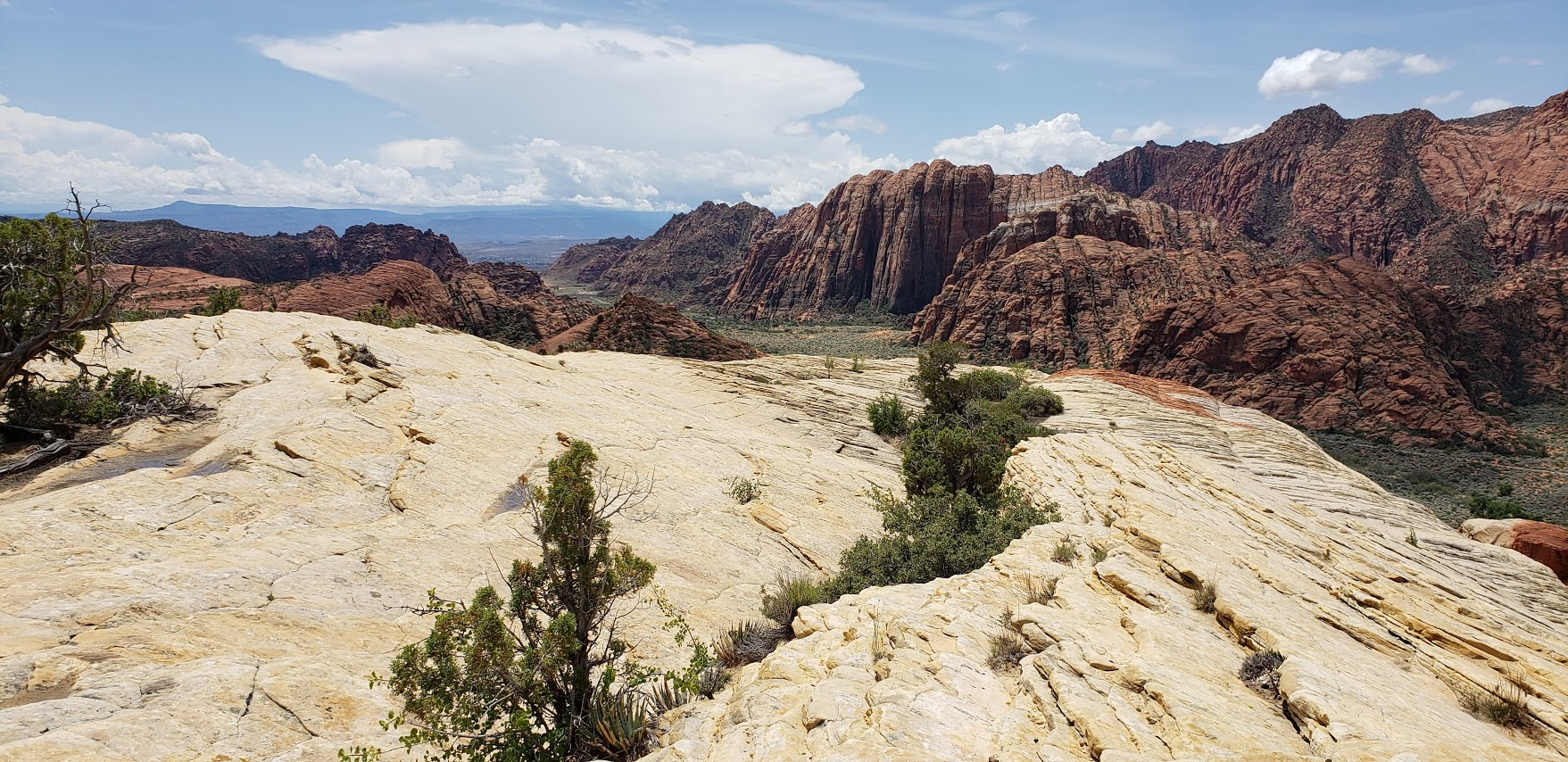 Scenic snow canyon
