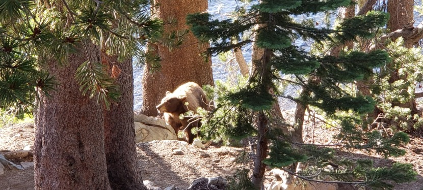 2 Short Hikes, 1 Bear Encounter, Mammoth Lakes, CA