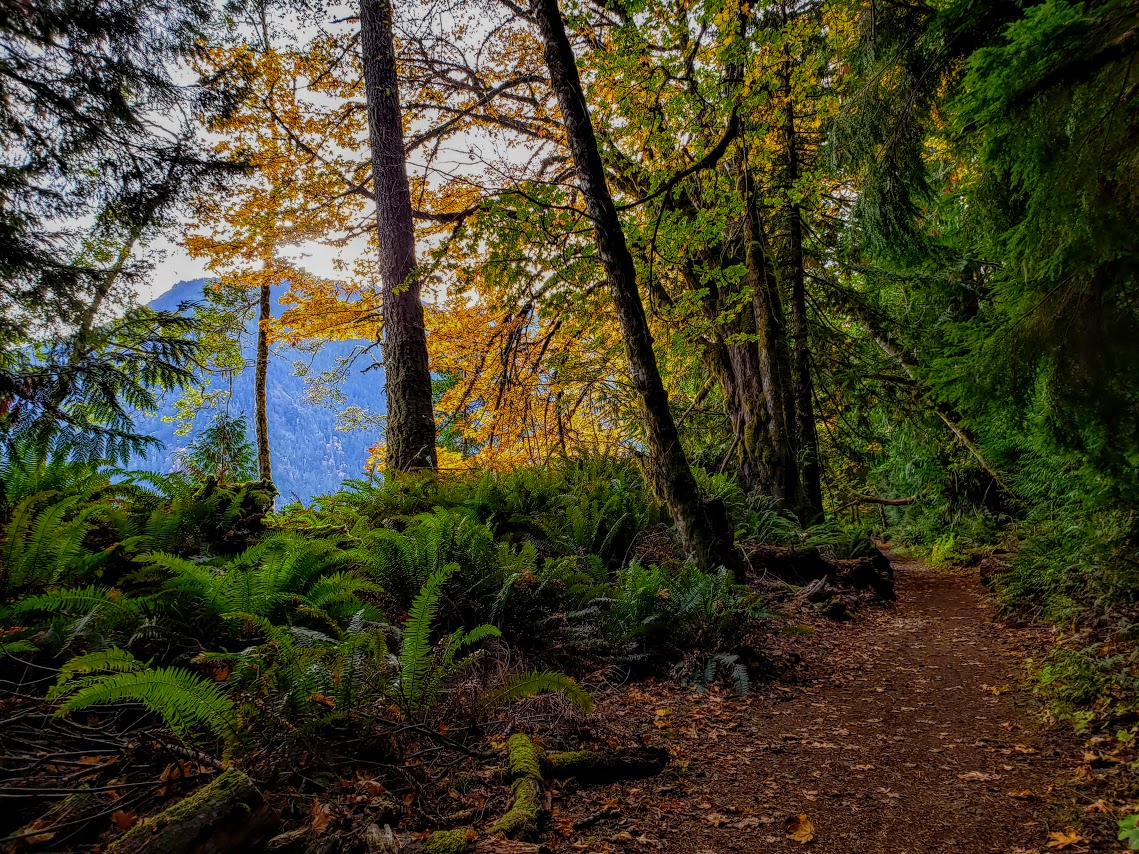 Views from the Spruce Railroad Trail, Lake Crescent