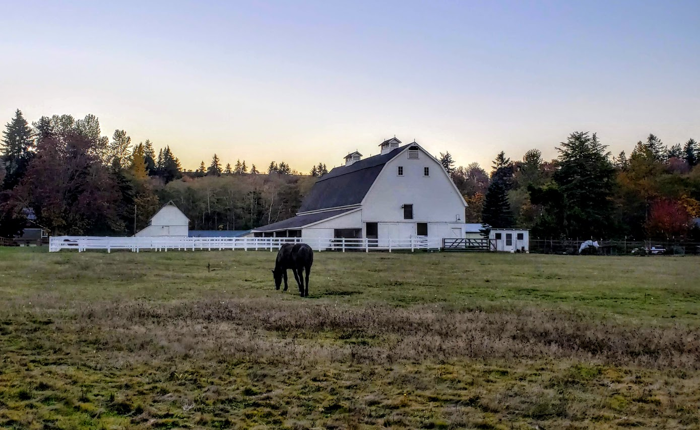 Port Angeles horse and barn