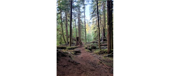trail near cascade falls