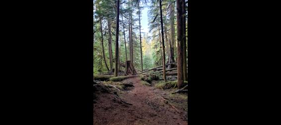 trail near cascade falls
