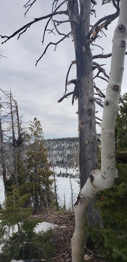 Frozen Navajo Lake